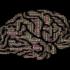 Neuroeducación y AACC