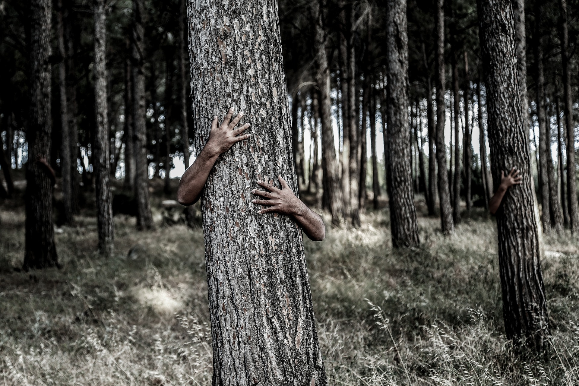hiding-1379426_1920
